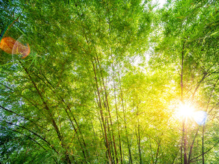 Bamboo forest background © hadkhanong