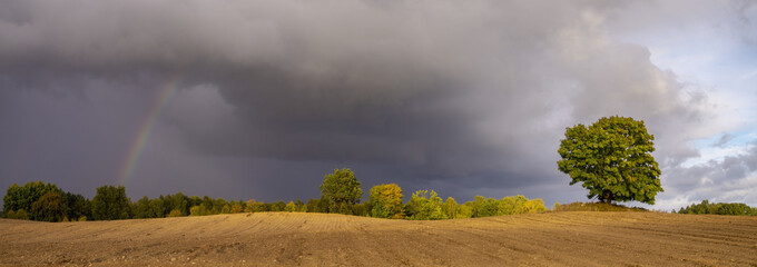 rainbow over a plowed autumn field and a lonely tree © Mike Mareen