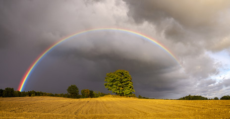 rainbow over a plowed autumn field and a lonely tree