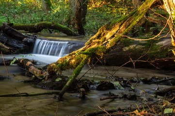 cascades and mini waterfalls on a small forest stream. The stream is created on the springs at the lake or in the Drawsko Lakeland © Mike Mareen