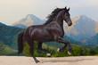 Friesian horse runs gallop assembly against mountains