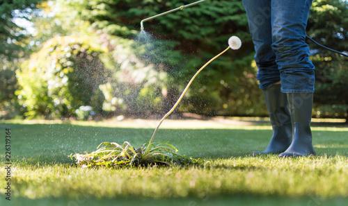 Spraying weeds in the garden - 226319364