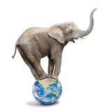 African elephant - Loxodonta africana balancing on a blue planet or globe. Ecology metaphor. - 226320105