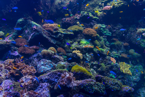 The bright underwater world of corals.