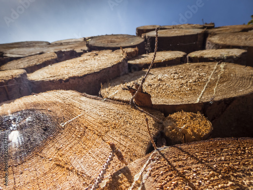 Aufgestapeltes Holz - 226337701