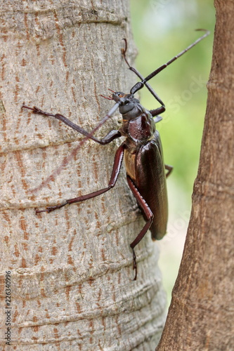 beetle on a trunck - 226340996