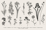 Summertime. Garden flowers. Vector vintage botanical illustration. Black and white - 226350507
