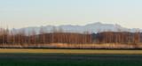 Alpenpanorma im Allgäu hintern Birken und Acker
