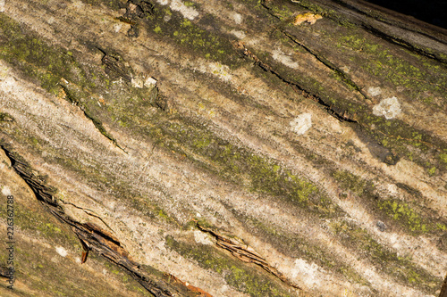 Old wood pattern texture and background