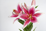 Beautiful pink lily bouquet on a white background.