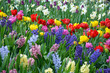 Beautiful spring garden filled with color - 226402789