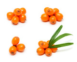 Sea buckthorn berries branch set isolated on white background - 226413504