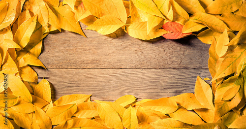 autumn leaves on wooden background with copy space - 226426182
