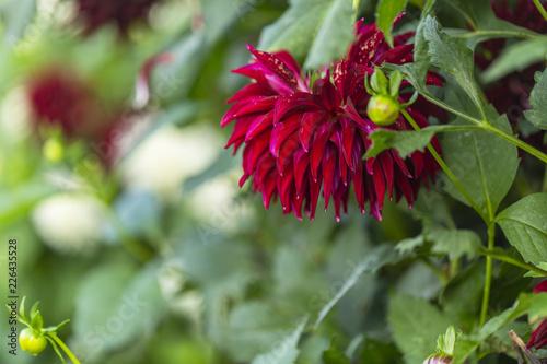 A beutiful wild flower - 226435528