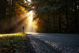 Herbstliche Landstraße