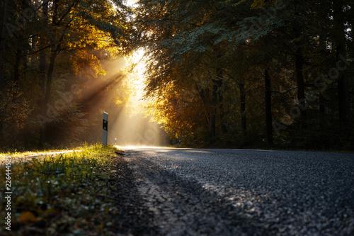 Jesienna droga krajowa
