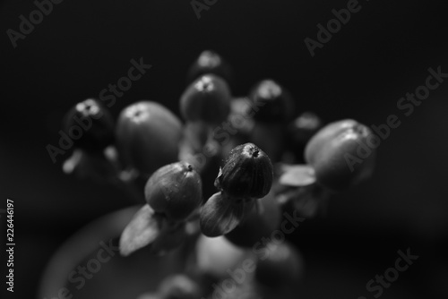 red fruits black and white - 226446197