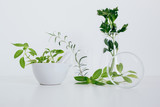 Organic botany and laboratory glassware.  Alternative herb medicine concept - 226460344