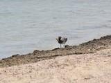 Ptaki i mewy nad woda i wybrzezu