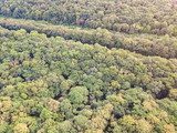 Forest in early autumn, aerial drone top view background. Earth day, environment protection theme.