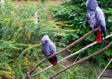 Papagei im Portrait