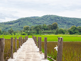 The bamboo bridge across rice fields.