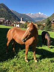 cavallo cavalli criniera alllevamento maneggio cavalcare