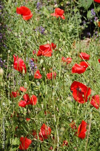 fleurs sauvages - 226518754