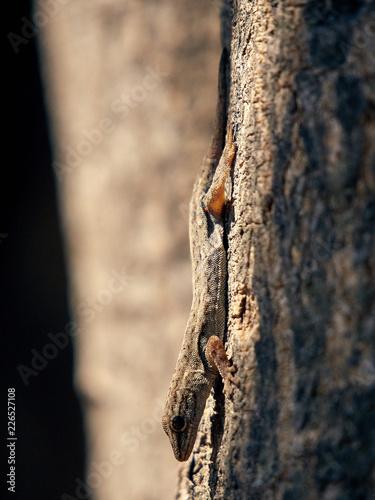 Foto Murales Lizard