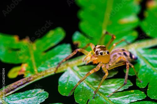 spider on leaf - 226529554