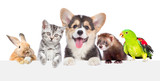 Group of pets together over white banner. isolated on white background
