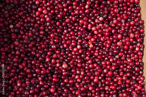 Foto Murales Natural background: berries of a red currant.