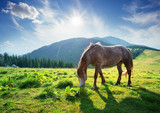 Horse on a mountain pasture in the rays of bright sun