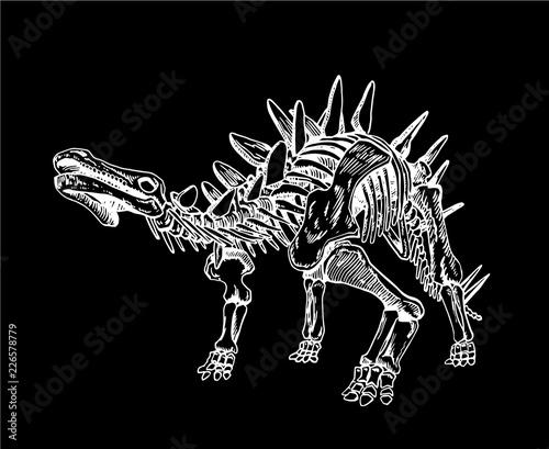 Graphical sketch of stegosaurus skeleton  isolated on black background,vector sketchy illustration