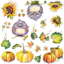 Autumn Set  Pumpkins Sunflowers Leaves And Funny Owl Characters  Elements For Design Watercolor Illustration Sticker