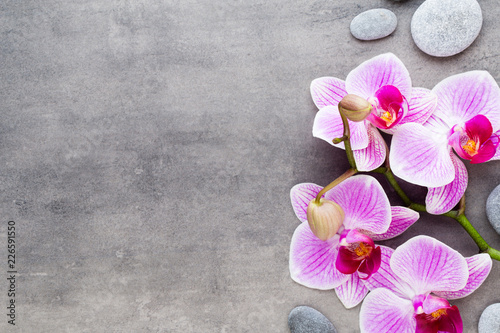 Leinwandbild Motiv Beauty orchid on a gray background. Spa scene.