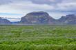 Iceland Wildflowers