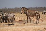 Point d'eau en afrique - 226617504
