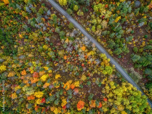 Foto Murales Fall Colors in Brule River State Forest in Northern Wisconsin during October