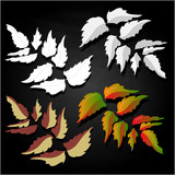 leaf autumn colorful vector illustration set isolated
