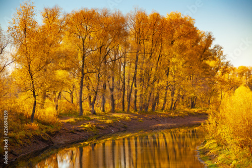 Foto Murales Autumn river surrounded by yellow trees and blue sky.