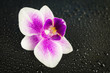 Pink orchid on black wet background with many water drops