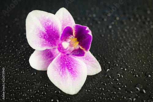 Leinwandbild Motiv Pink orchid on black wet background with many water drops