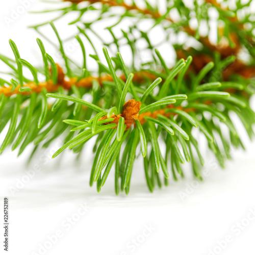Foto Murales Christmas tree branch