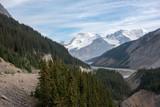 Nadelwald Gebirge