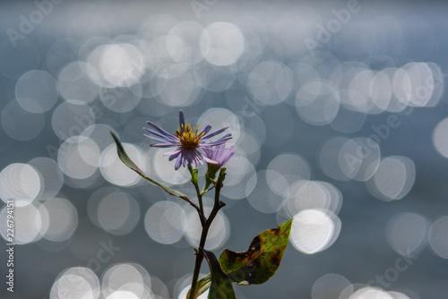 Foto Murales Blume vor See