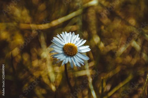 Foto Murales Kwiaty w ogrodzie