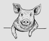 Sketch of pig. Hand drawn illustration converted to vector. - 226815500
