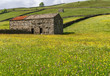 Wild flower meadows at Muker in Swaledale