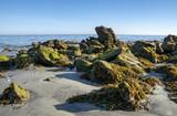 Pierres couvertes d'algues sur la côte atlantique